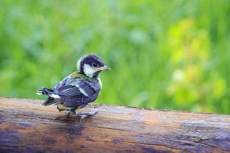 nestling: A lonely nestling