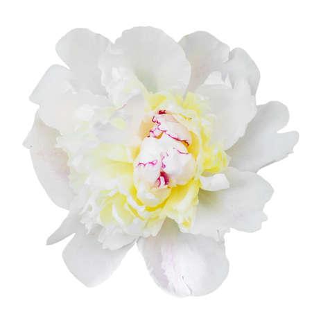 perfumed: Single white peony isolated on white background