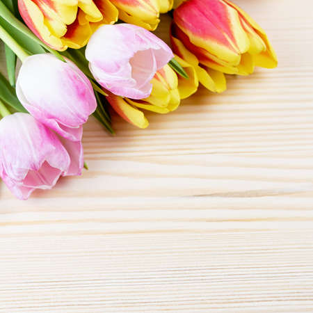 Red and pink tulips on wooden background closeup