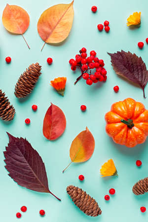 Autumn composition with leaves, pumpkins, rowan berries on mint background in harsh light. Autumn, fall, halloween, thanksgiving day concept. Flat lay, top view, copy space