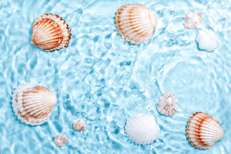 Beautiful crystal clear water swirling, sea shells underwater. World ocean day card with shells and blue water. Global environmental problem concept