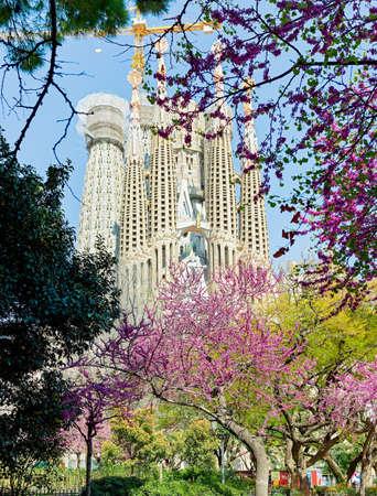 BARCELONA, SPAIN - MARCH 24, 2021: The Basilica de la Sagrada Familia in Barcelona in spring with blooming trees