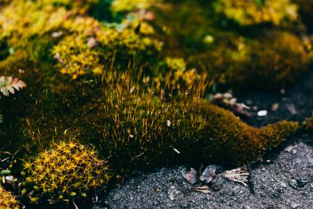 Background of green moss growing on asphalt