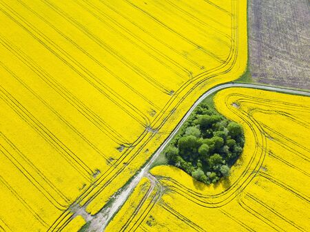 Aerial top view with drone of ground road in yellow fields with blooming rapeseed, agriculture