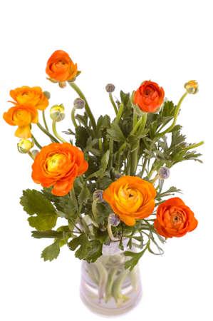 ranunculus: orange ranunculus