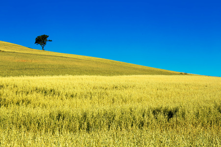 wonderful natural landscape in basilicata, southern Italy Stock Photo