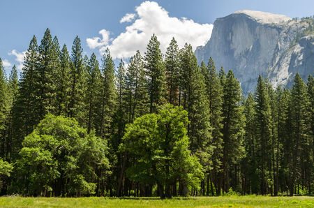 bloc: View at the Yosemite National Park