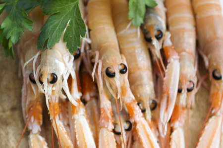 scampi: A lot of scampi