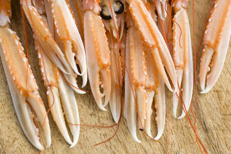 Pincer of scampi photo