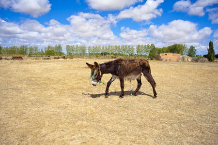 dun: Donkey Stock Photo