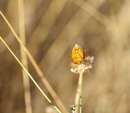 Insect on a dried flower  photo