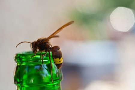 bottleneck: Wasp on the green bottleneck