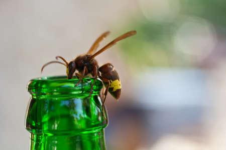 Wasp on the green bottleneck photo