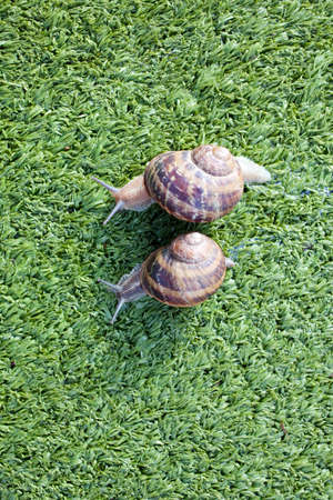 Snails Stock Photo - 9936812