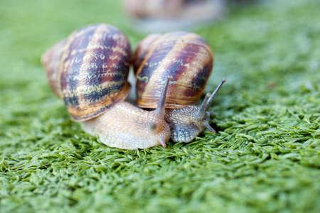 Snails photo