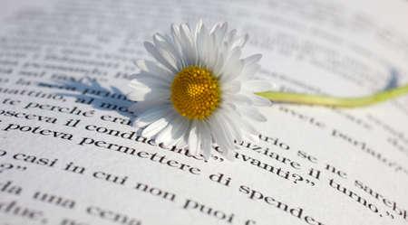 Daisy sur un livre