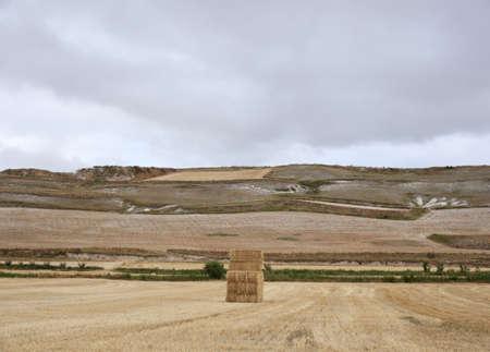 Bales of hay Stock Photo - 9983949