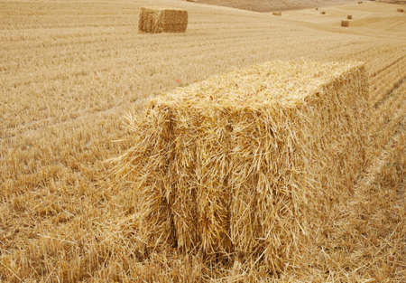 Bales of hay photo