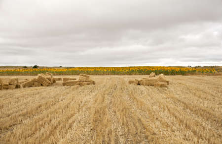 Field after the harvest Stock Photo - 9983957