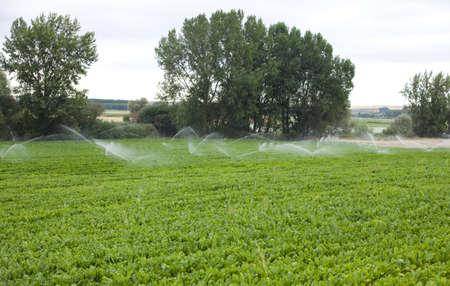 san joaquin valley: Irrigation Stock Photo