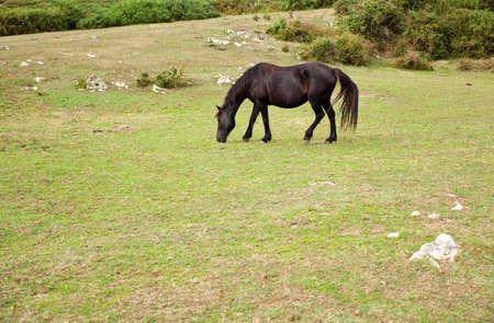 Herd of horses grazing, Spain photo