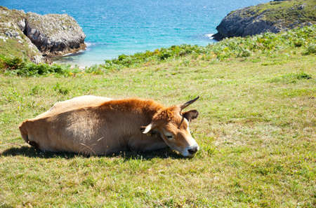 Herd of cows grazing next to sea photo