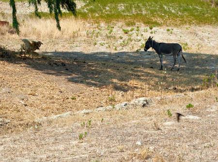 baby ass: Donkey Stock Photo