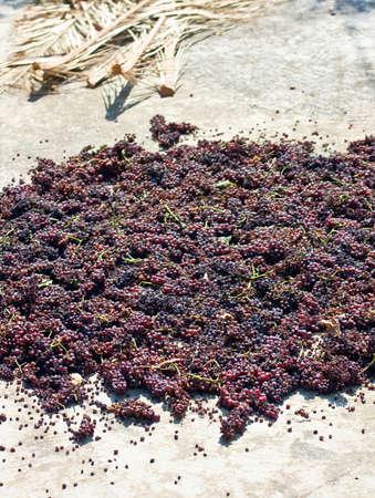 must: Grape must Stock Photo