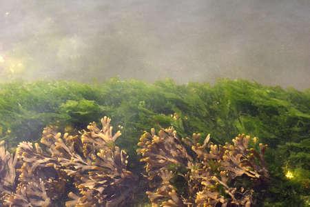 grimy: Algae