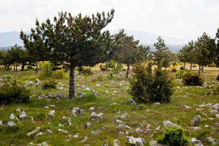 karst: Plateau Karst near Koper, Slovenia