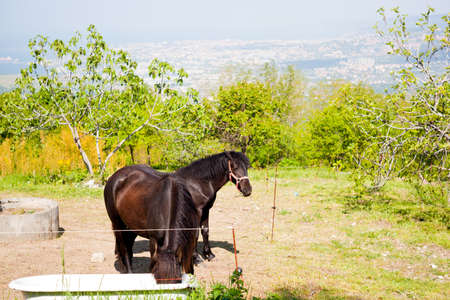 Horse grazing in the mountains  Banque d'images