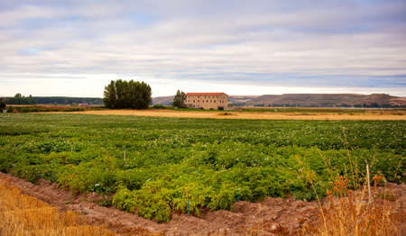 Cultivation in a spanish farm photo