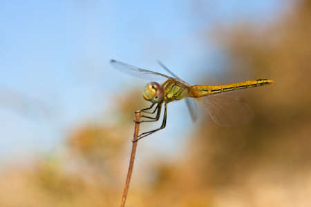 Dragonfly Stock Photo - 10585108