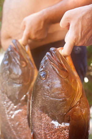 gills: Close up of two big Groupers