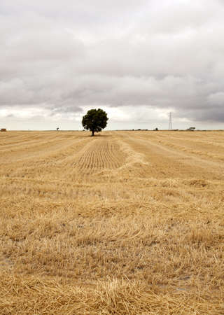 Spanish countryside, Way of St. James photo