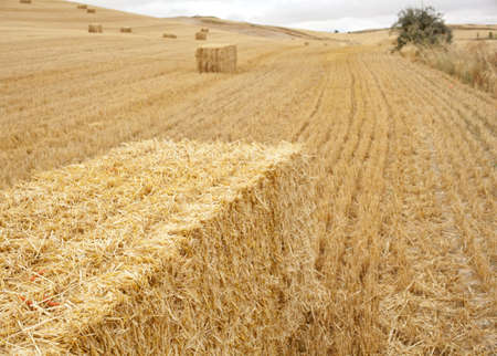 pilgrim journey: Bales of hay in the spanish countryside