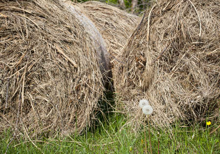 Bales of hay in the countryside Stock Photo - 11635160