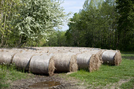 Bales of hay in the countryside Stock Photo - 11634825