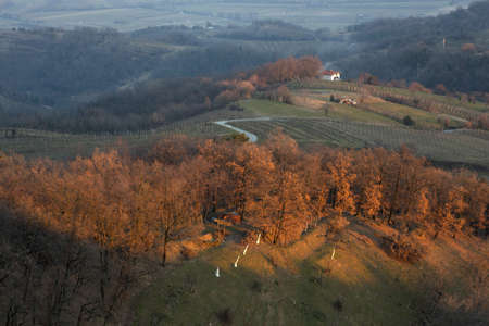 vineyard plain: Slovenian countryside