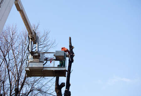 hoists: Pruning trees