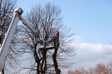 Pruning trees  Stock Photo - 11805213