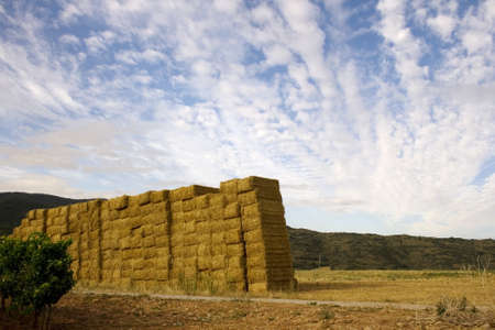 bales of hay in a farm field photo
