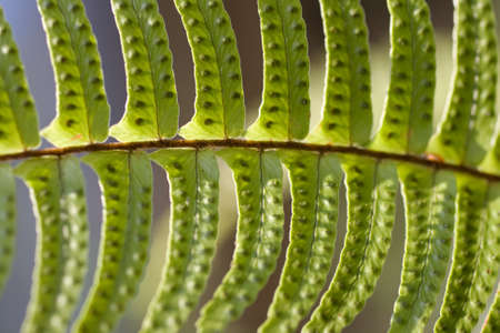 Close up of a fern leaf photo