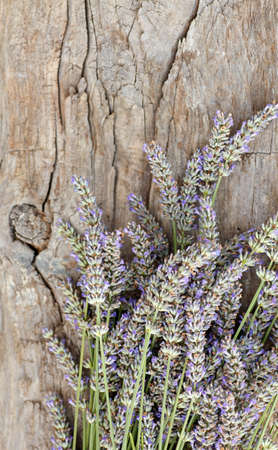 Lavender flowers in bloom on old wooden surface photo