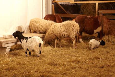 caballo bebe: Los animales, granja