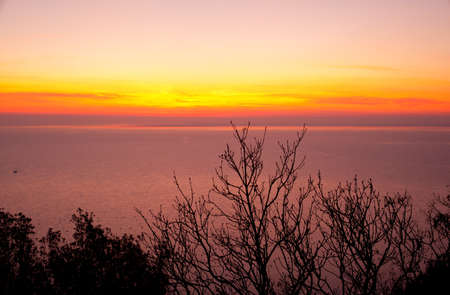 View of Tree and sunset, Trieste sea photo