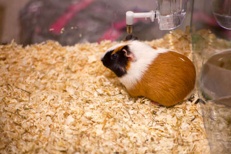 ludicrous: Photo of nice hamster in the sawdust