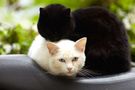 Photo of Beautiful black and white cats photo
