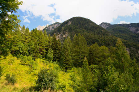 View of the Forest in the Slovenian Julian Alps Stock Photo - 13602761