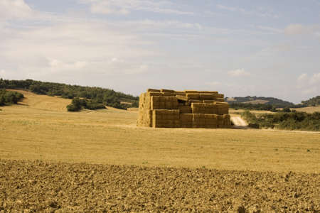 Bales of hay in the spanish countryside in the summer photo